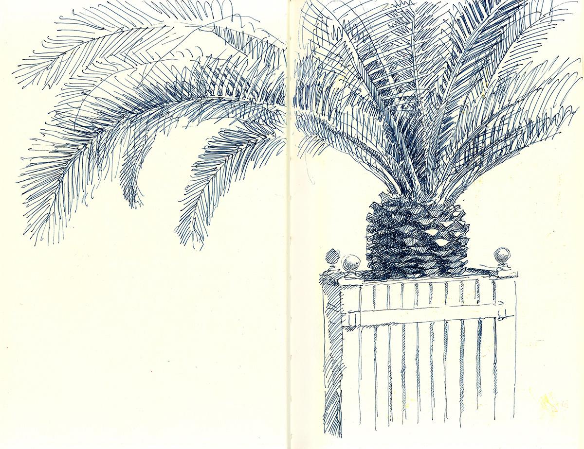 Palm1