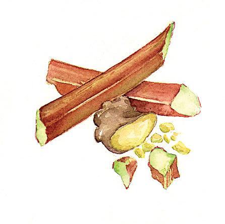 MOSS-Rhubarb